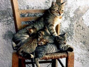 quanto vivono i gatti persiani gatta in calore il gatto