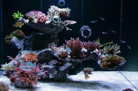reef aquarium design ottawa bonsai aquascape nice aquascape reef tank reef tank