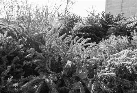 best 28 weihnachtsbaum selber schlagen leipzig