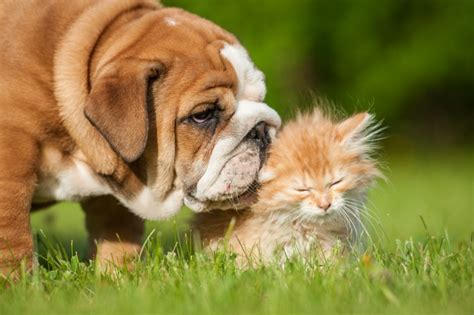 how many sets of do puppies get reasons why cats are easier to look after than dogs pets4homes