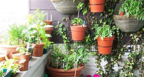 piante da terrazza arredo terrazzo piante da terrazzo come arredare il