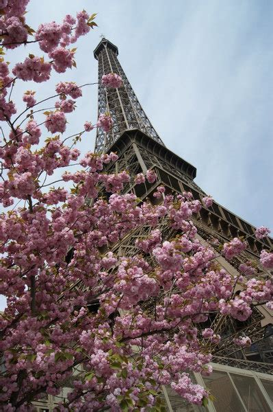 eiffel tower paris in spring find super cheap eiffel tower spring time photo