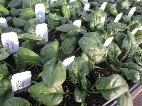 year vegetable gardening 17 best images about garden on gardens vegetables and