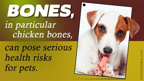 feeding dogs chicken should you feed chicken bones to your