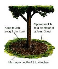 how to mulch flower beds best 25 landscaping around trees ideas on pinterest tree bench patio ideas around