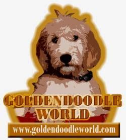 doodle quest unblocked tweets with replies by goldendoodle world doodleworld