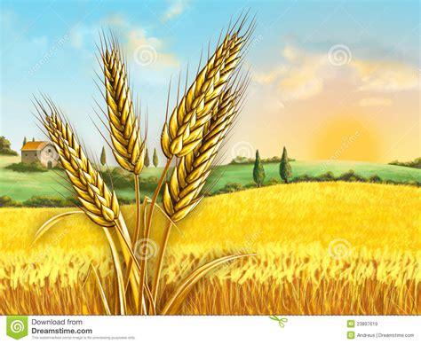 wheat clip wheat crop clipart www pixshark images galleries