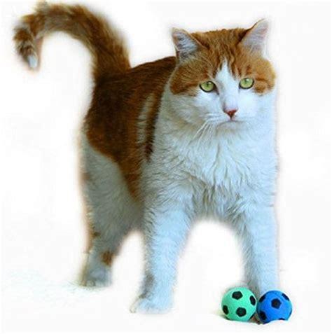 petfavorites foam sponge soccer ball cat toy best
