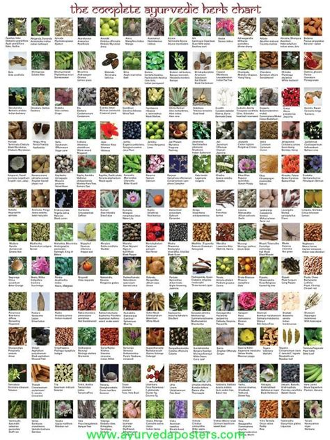 medicinal herb chart herbalism medicine skinny diva diet ayurveda herb chart