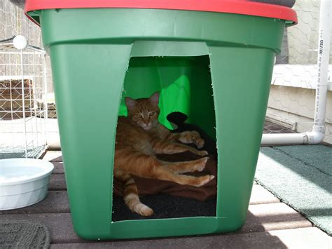 backyard cat the very best cats how to make a winter shelter for an outdoor cat