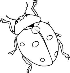 Ladybug Coloring Pages Coloring Pages To Print Ladybug Coloring Page
