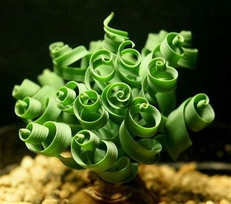 unique indoor plants houseplants for sale plant green plants awesome 10 beautiful succulent varieties for your home or garden