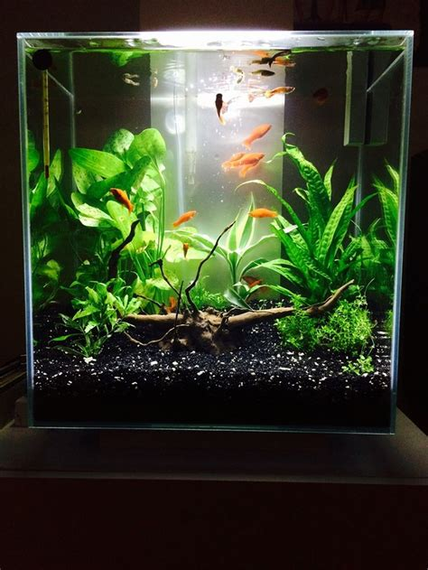 fluval edge 2 beleuchtung 105 best images about fluval edge inspiration on