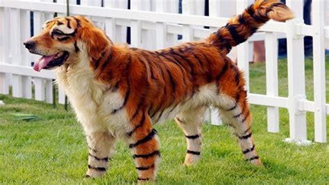 s breeds world s rarest breeds
