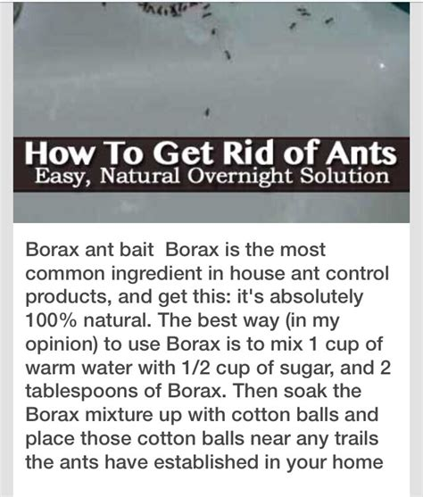 get rid of ants in bathroom get rid flying ant infestation way to get rid of