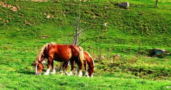 best pyrenees photos horses cauteret pyrenees france