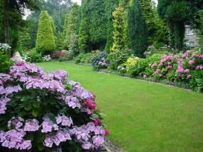 garten hortensie hydrangea in green house