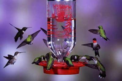 hummingbird nectar recipe hummingbird diet