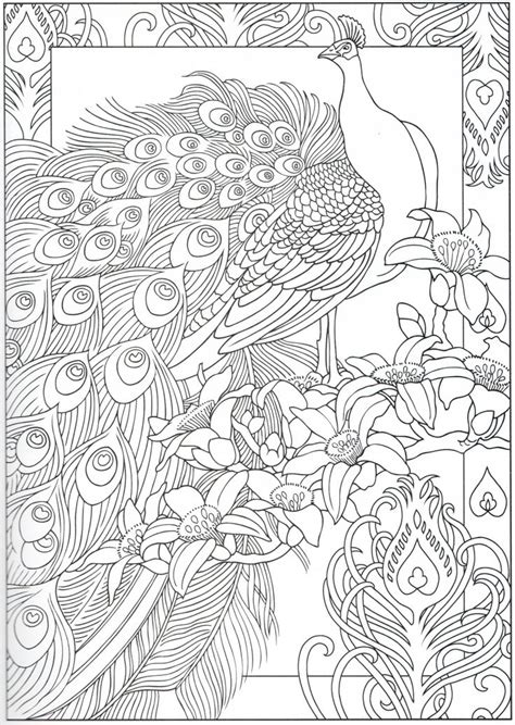 Coloring Page Ideas by Peacock Coloring Page 29 31 Color Pages Stencils