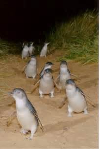 how do they celebrate in australia the march the and penguins on