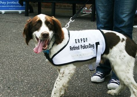 retired dogs awards for essex s retired dogs your harlow