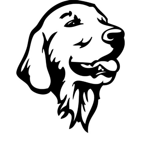 black and white golden retriever pictures black and white drawings breeds picture
