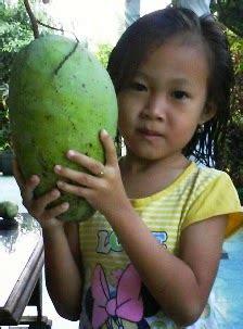 Harga Bibit Mangga Kio jual bibit tanaman buah mangga budidaya tanaman