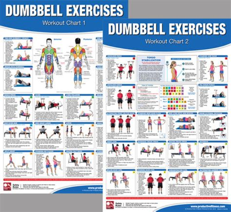 dumbbell exercises workout professional fitness wall