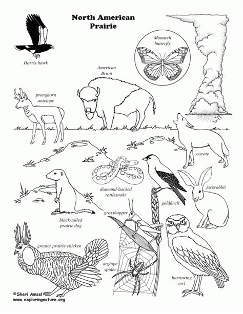 animal house coloring page prairie animals coloring pages coloring home