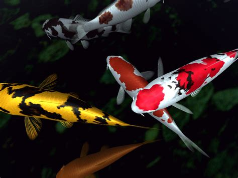 black and white koi wallpaper 22 koi hd wallpapers background images wallpaper abyss