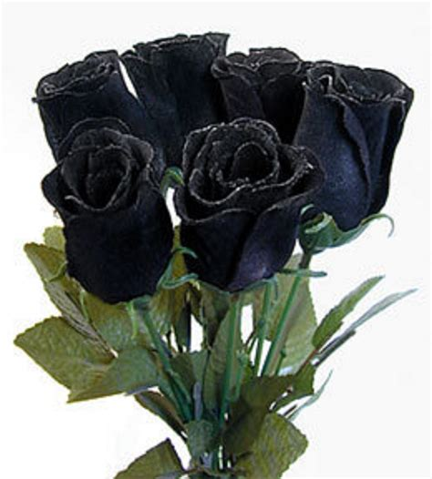 Black Roses Asma With Friends Black Roses For