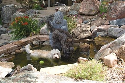 dog friendly backyard landscaping 1000 ideas about dog friendly garden on pinterest dog backyard dog friendly