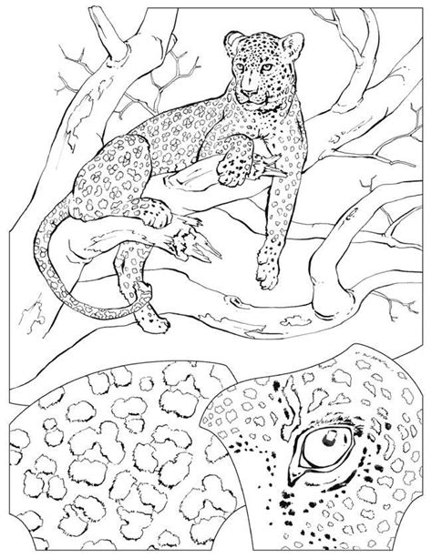 coloring pages animals national geographic coloriage felins des coloriages d animaux et de felins