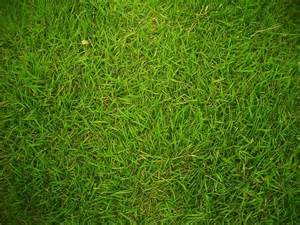 the 4 most common grass types in fort worth tx