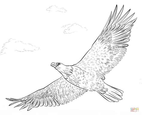 coloring page eagle flying bald eagle in flight coloring page free printable