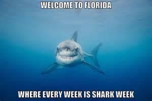Shark Week Meme - funny shark memes memes