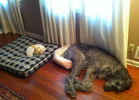 funny dog beds funny dog beds memes