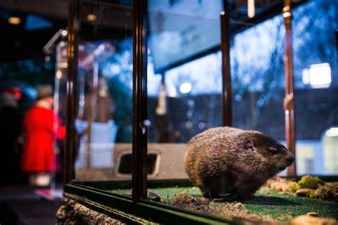 groundhog day 2015 staten island zoo groundhog day cold blasts northeast feb 2
