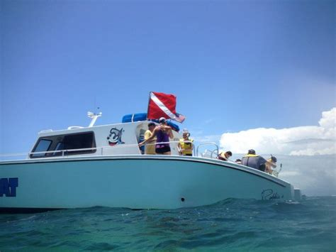 cheap boat rentals islamorada happy cat snorkel boat islamorada all you need to know