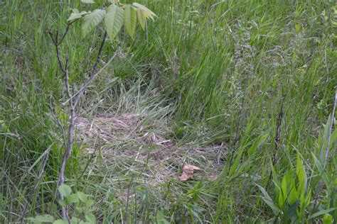 how to find deer bedding areas late season deer hunting and scouting how to read deer