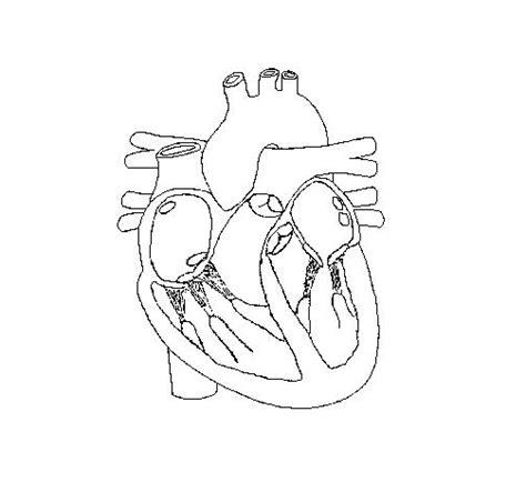 heartconduction