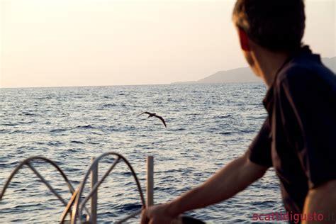 uccello simile al gabbiano petrini hemingway e le alici nel mare di angelo vassallo