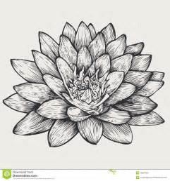 Lotus Floral Design Lotus Floral Design Element Stock Photos Image 18557693