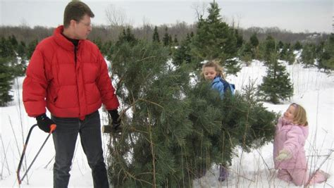christmas tree farms in buffalo erie county niagara