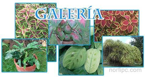 imagenes flores y nombres galer 237 a de fotograf 237 as de plantas decorativas y ornamentales