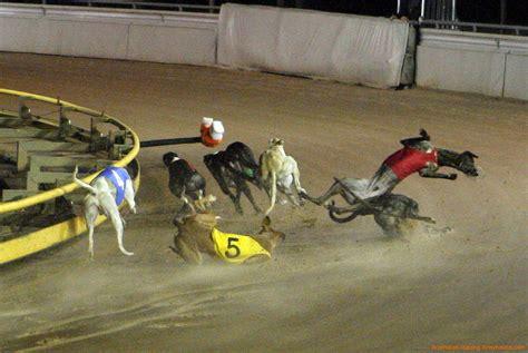 greyhound racing ironicus maximus september 2013
