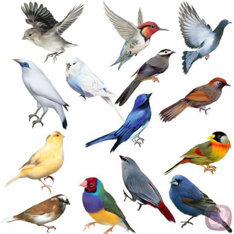 imagenes animales aves zoolog 237 a subphyllum vertebrados clase aves y mam 237 feros
