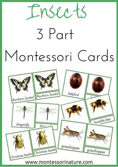 montessori nature free montessori math worksheets insects 3 part montessori nomenclature cards learning