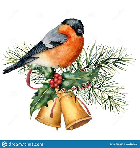 bullfinch cartoons illustrations vector stock images  pictures