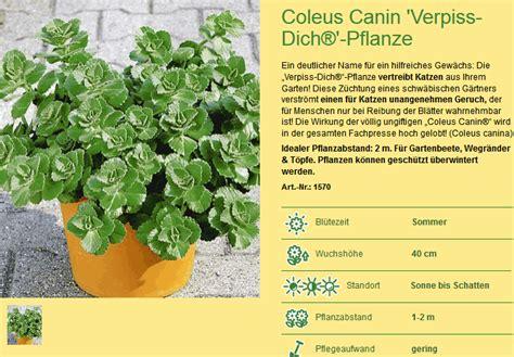 Verpiss Dich Pflanze Kaufen 3259 by Katzen Vertreiben G 228 Rten Beete Und Terrassen